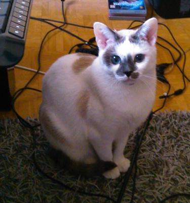 Des nouvelles de bianca animaux en d tresse for Adaptation chat nouvelle maison