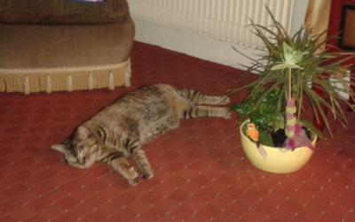 Des nouvelles d 39 esm e animaux en d tresse - Bruit qui attire les chats ...