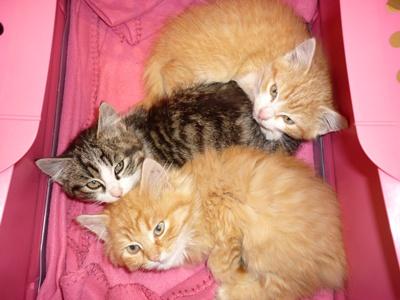 Site de rencontre pour les amoureux des chats